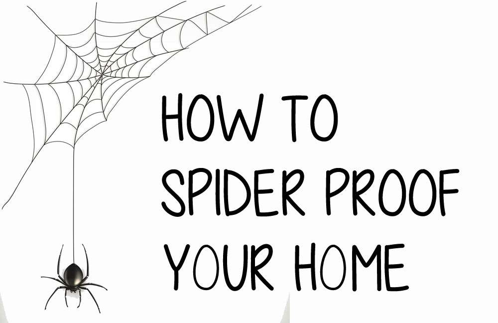 how to spider proof home