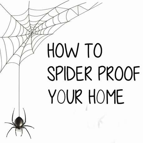 spider proof home