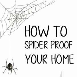 spider proof your home