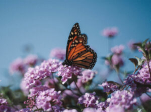 How to attract wildlife into garden